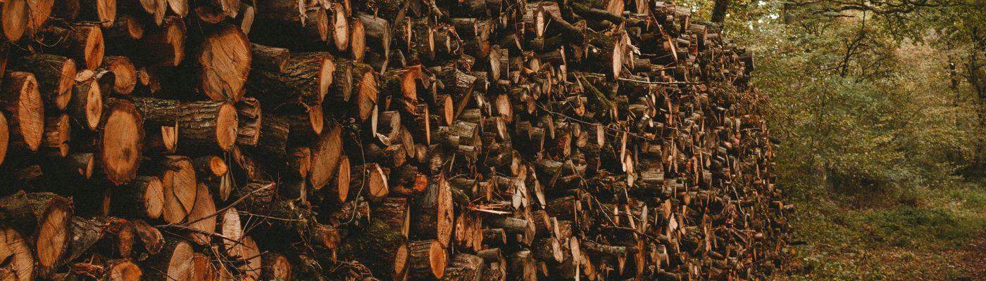 Bobr – rizikové kácení a prodej palivového dřeva